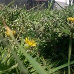 Fotoreportaj de primăvară la 11 ani. Să iubim mai mult natura! #stamacasa #responsabilitate