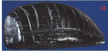 Piesă rară la Muzeul Județean din Paleolitic